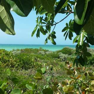 Sisal beach view